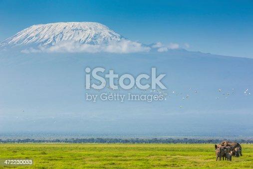 182061384 istock photo Peak of the Mt Kilimanjaro and elephants family 472230033