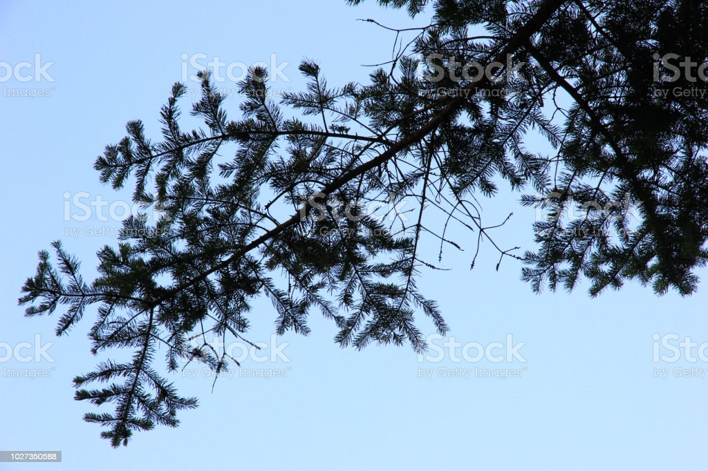 árvore do pico do vista de botton, criada pelo conceito de céu azul ans árvore de silhoulette - foto de acervo