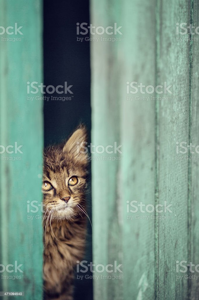 Peaking Cat stock photo