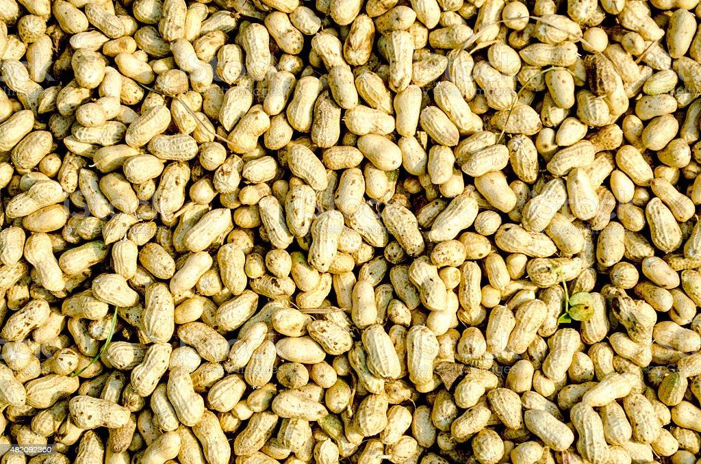 Peanut - Food stock photo