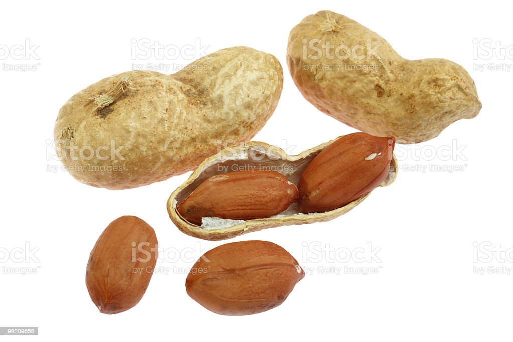 Peanut with pods royalty-free stock photo