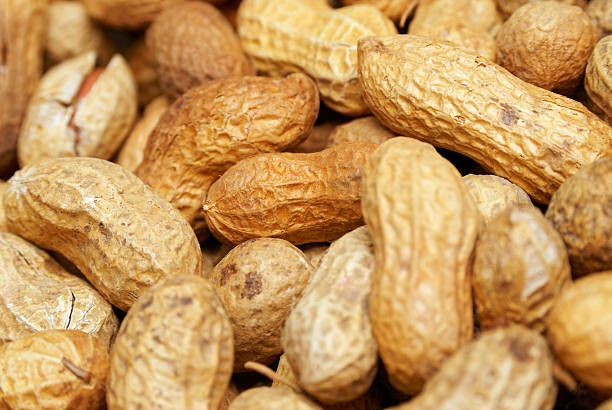 Peanuts in the shell stock photo