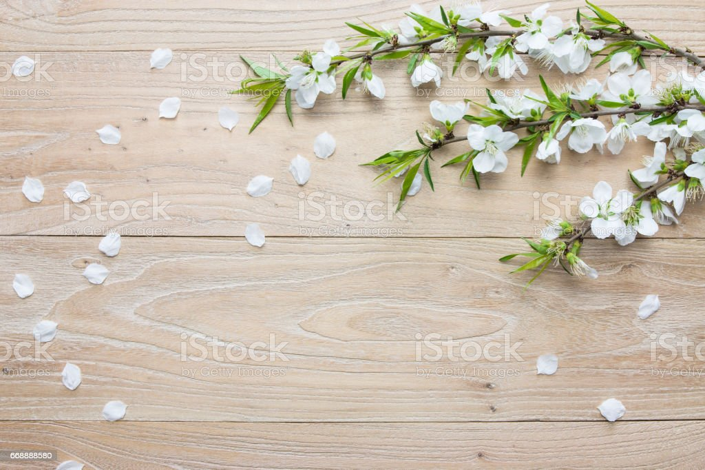 Pear flower stock photo