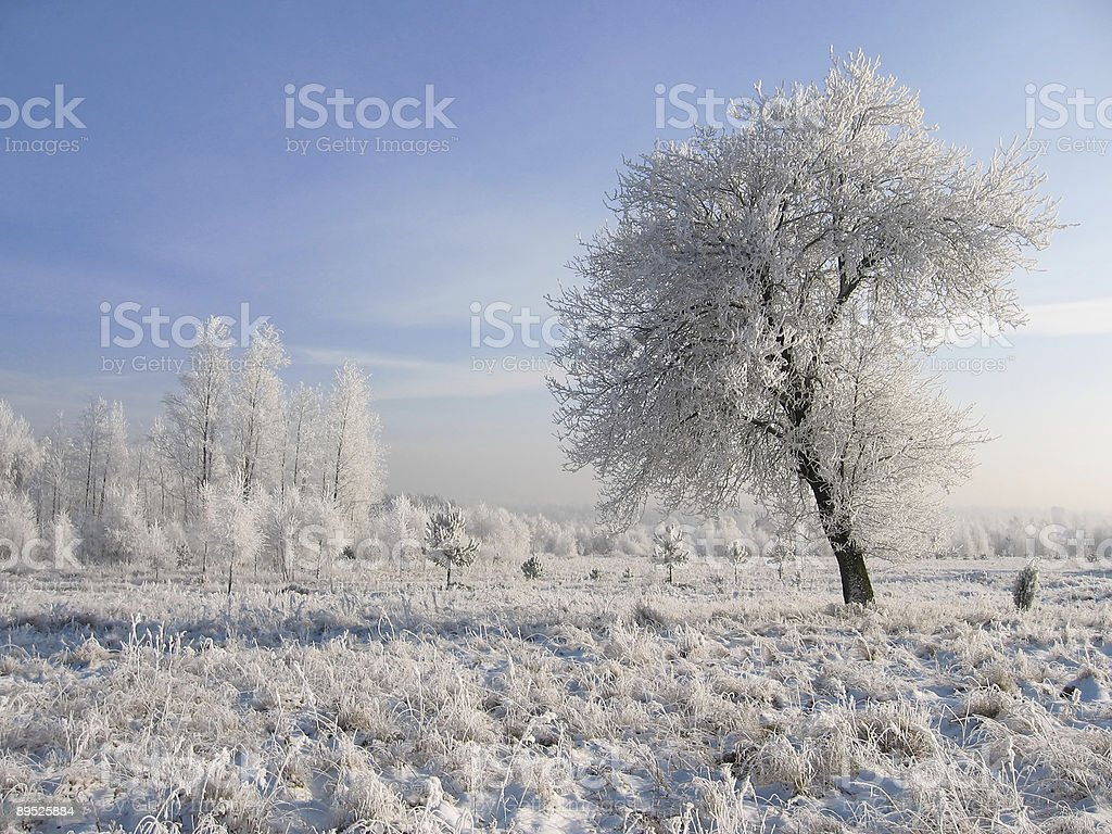 pear in snow royalty-free stock photo