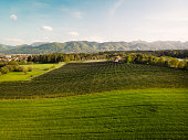 Aerial view, drone shoot of an apple and pear orchard in the country side of Slovenia. Large orchard of apples spread over a large green field in the country side.