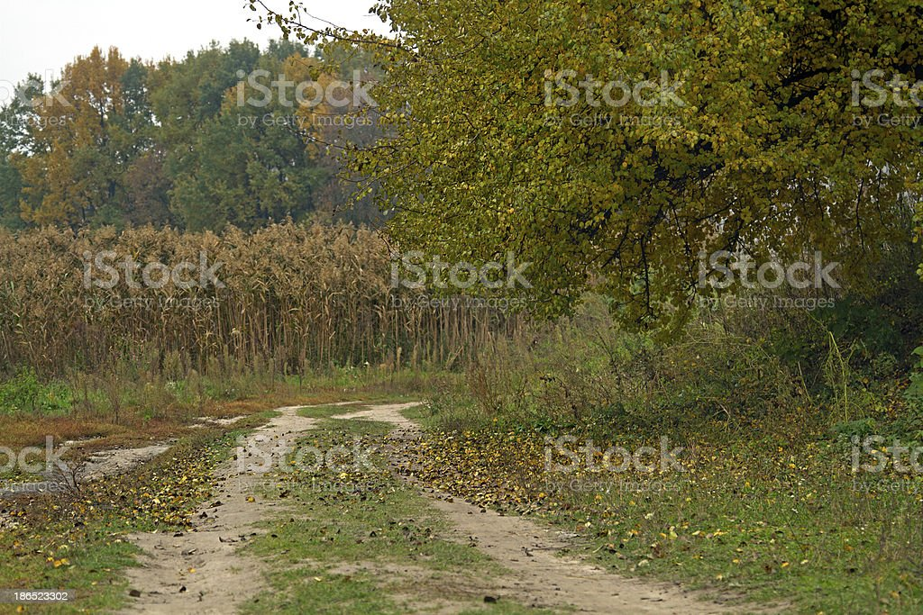 pear tree, road royalty-free stock photo