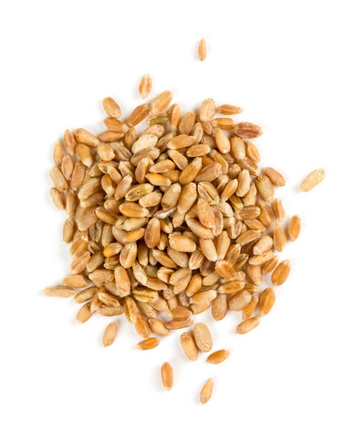 pearl barley isolated on white - barley stock pictures, royalty-free photos & images