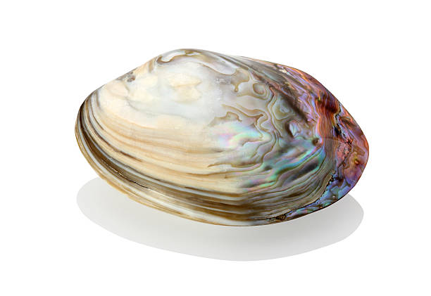 pearl - mother of pearl stock photos and pictures