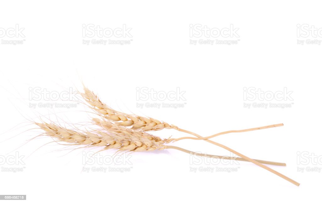 pearls barley grain seed on background stock photo