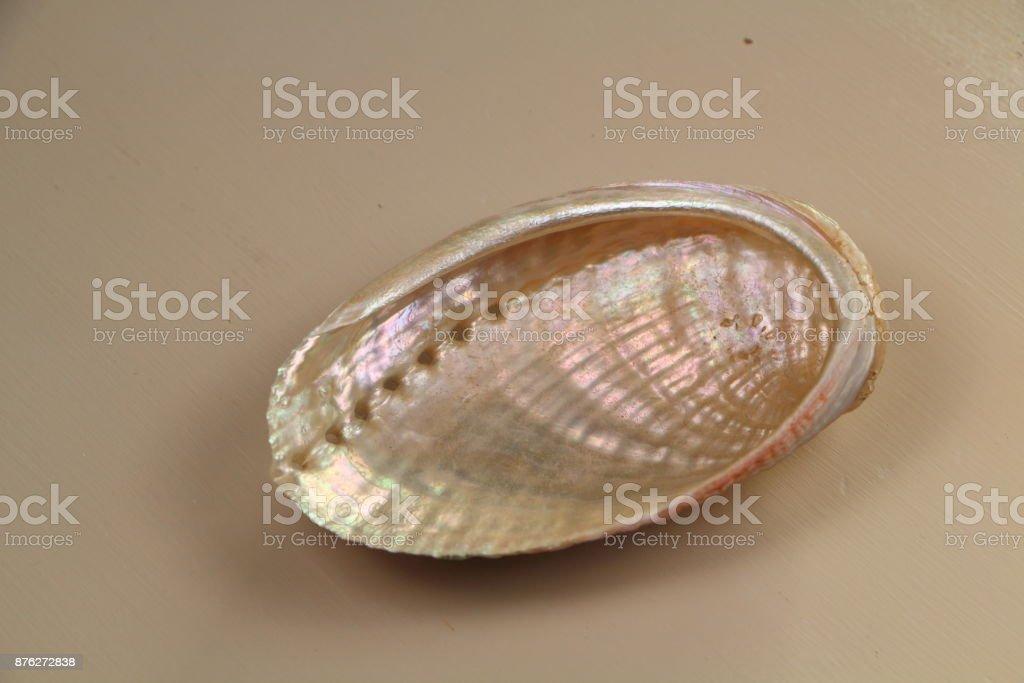 Pearly seashell stock photo