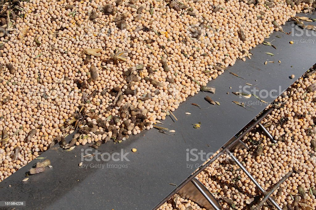 Peas in an Auger royalty-free stock photo