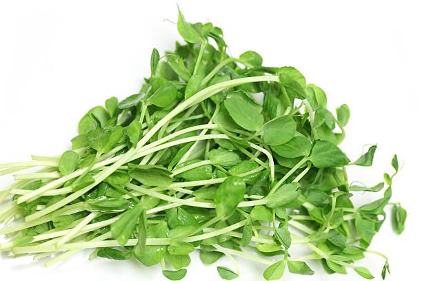 peas sprouts lathyrus - pea sprouts bildbanksfoton och bilder