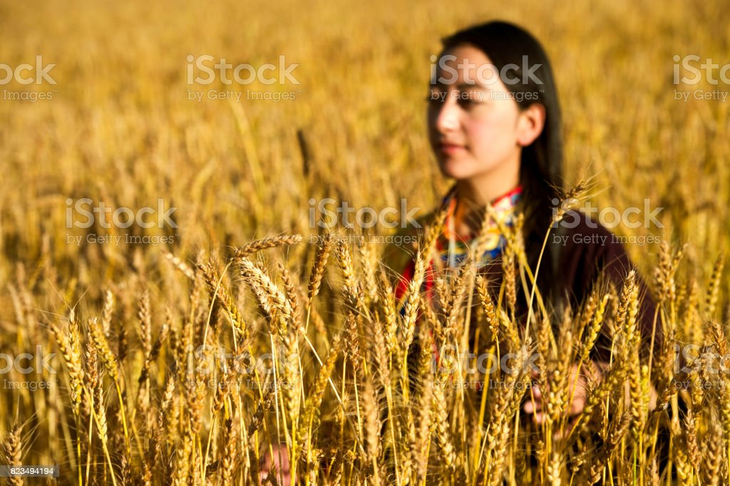 Peasants preparing sheaves of highland barley. Tibet. stock photo