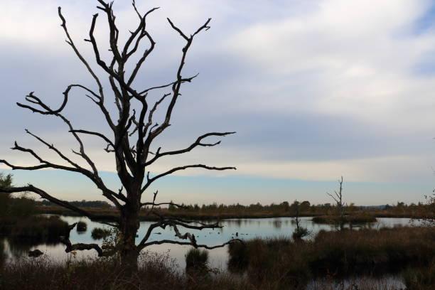 peat lake stock photo