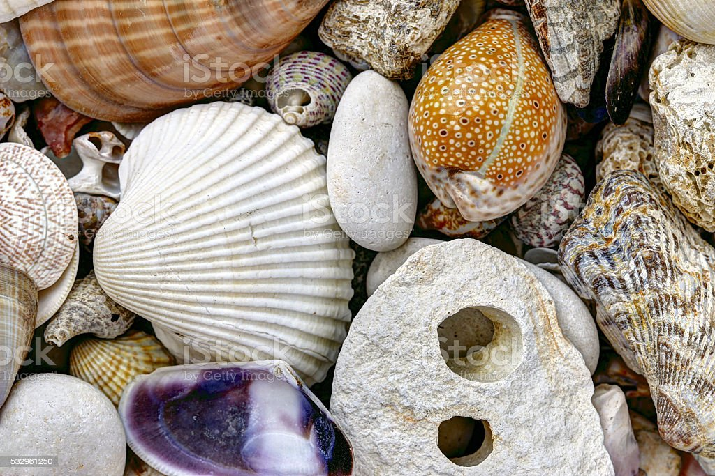 Pebble stones and scallops and shells stock photo
