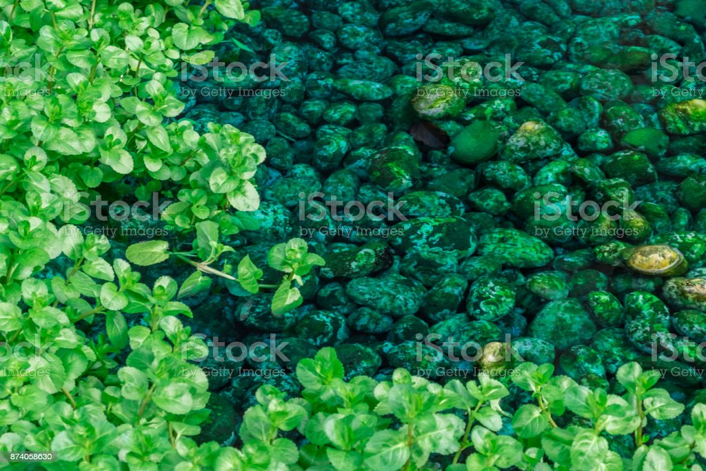 rodeado por vegetação em uma lagoa local de seixos - foto de acervo