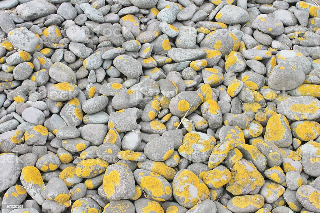 Pebbles with lichen stock photo