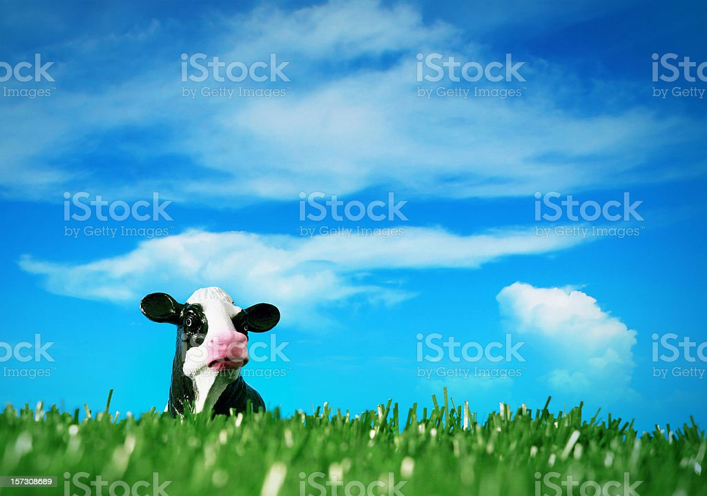 peck a boo cow royalty-free stock photo