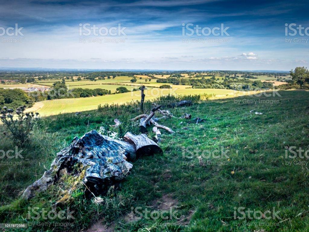 Peckforton Hills fallen tree stock photo