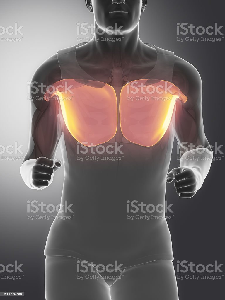 Pectoralis major - human muscle anatomy stock photo