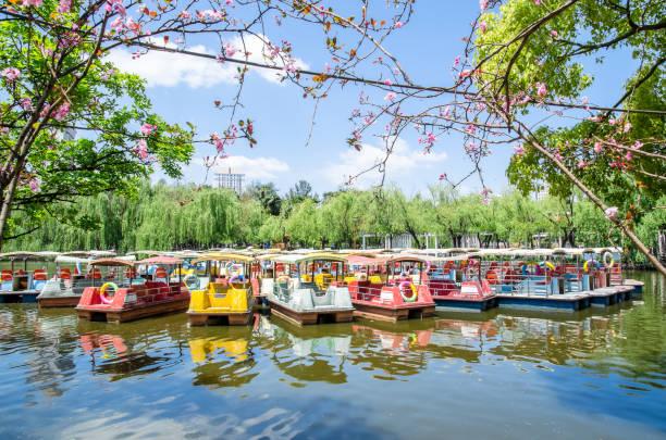 그것은 또한 cui hu 공원으로 알려진 그린 호수 공원에서 주차 pedalo 보트 쿤밍 시에서 가장 아름 다운 공원 중 하나입니다. - 쿤밍 뉴스 사진 이미지