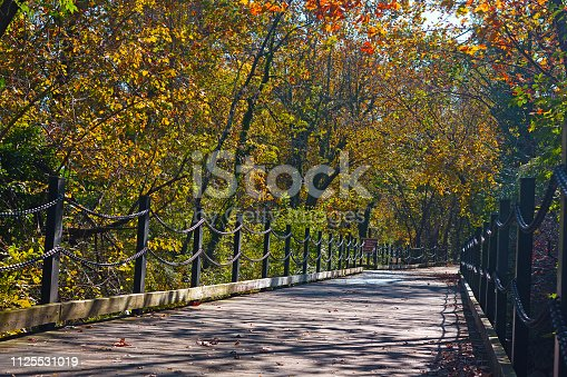 Trail among deciduous trees on a sunny morning in autumn.