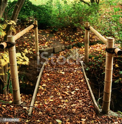 Foot bridge in the woods. Autumn 2011, England. Fallen autumn leaves. Focus on the foreground only. Scan from 120 Velvia 50