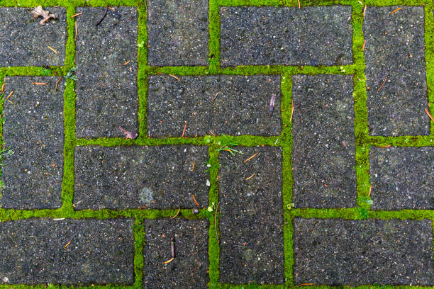 pedestrian tile with moss growing through the joints stock photo
