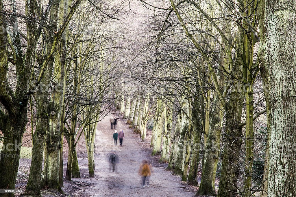 Pedestrians in a tree-lined avenue during winter royalty-free stock photo