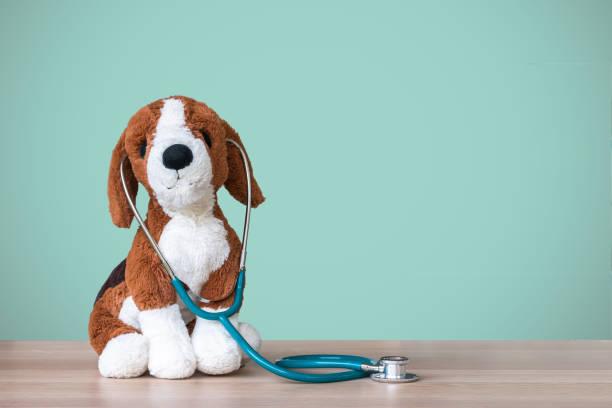 médico pediatra para asistencia médica de niños y cuidado con el perro de juguete, estetoscopio y espacio de copia de la pizarra en blanco en la mesa de trabajo del clínico pediatra en el hospital del niño - pediatra fotografías e imágenes de stock