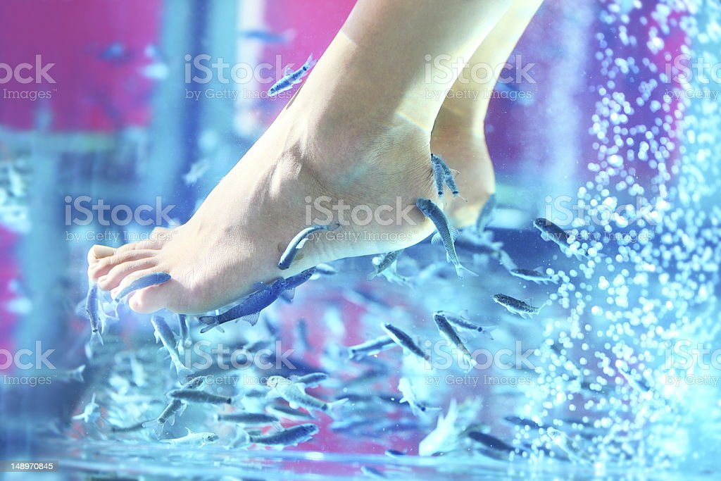 Pedicure fish spa - rufa garra royalty-free stock photo