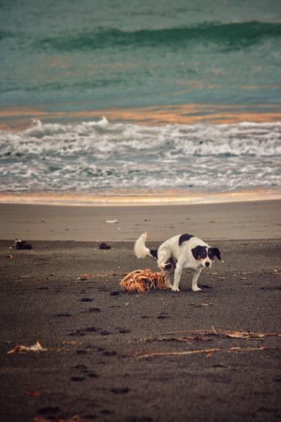 Beach peeing Umbra on