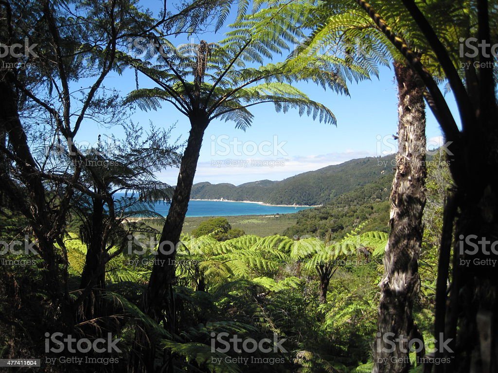 Peek-a-boo View of Bay at Abel Tasman National Park stock photo