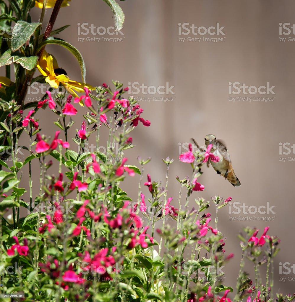 Peeking Over the Flowers stock photo