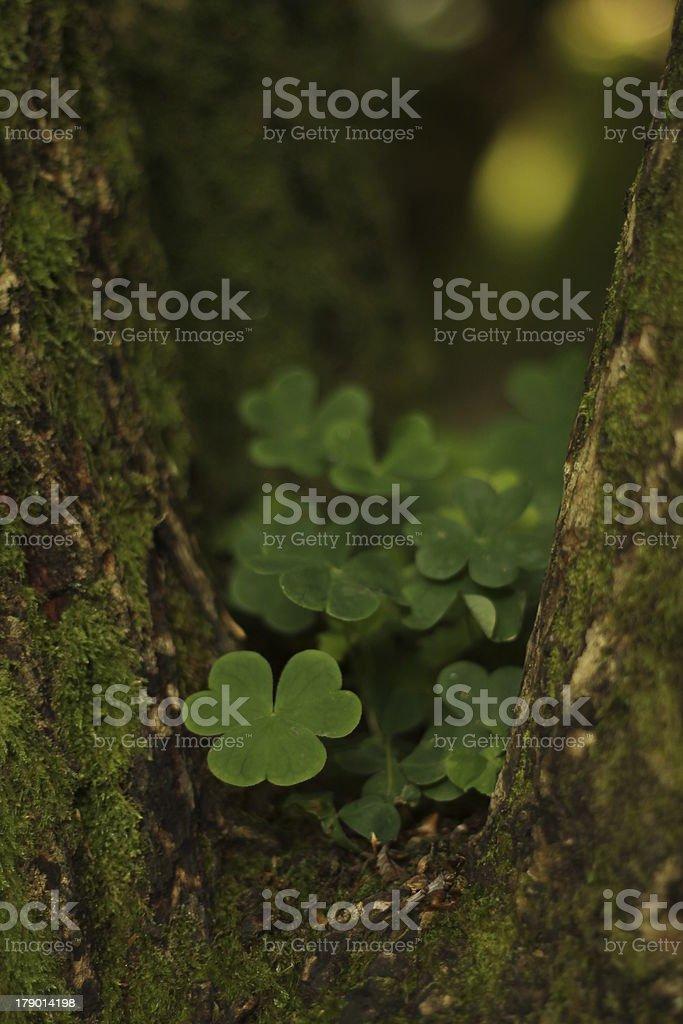 Peeking stock photo