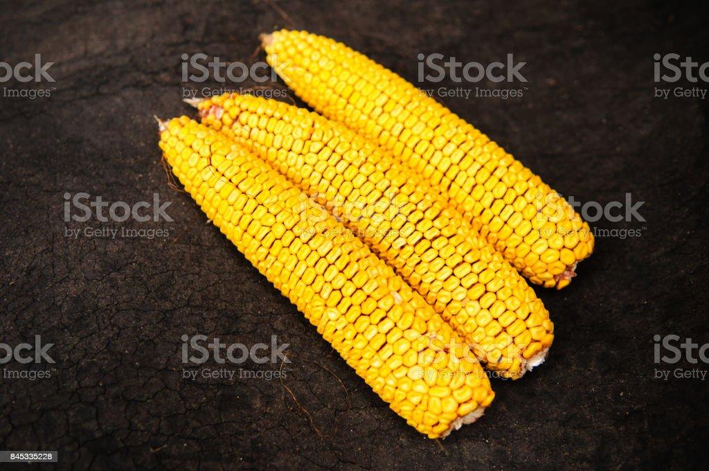 Peeled corn cobs on dry cracked soil stock photo