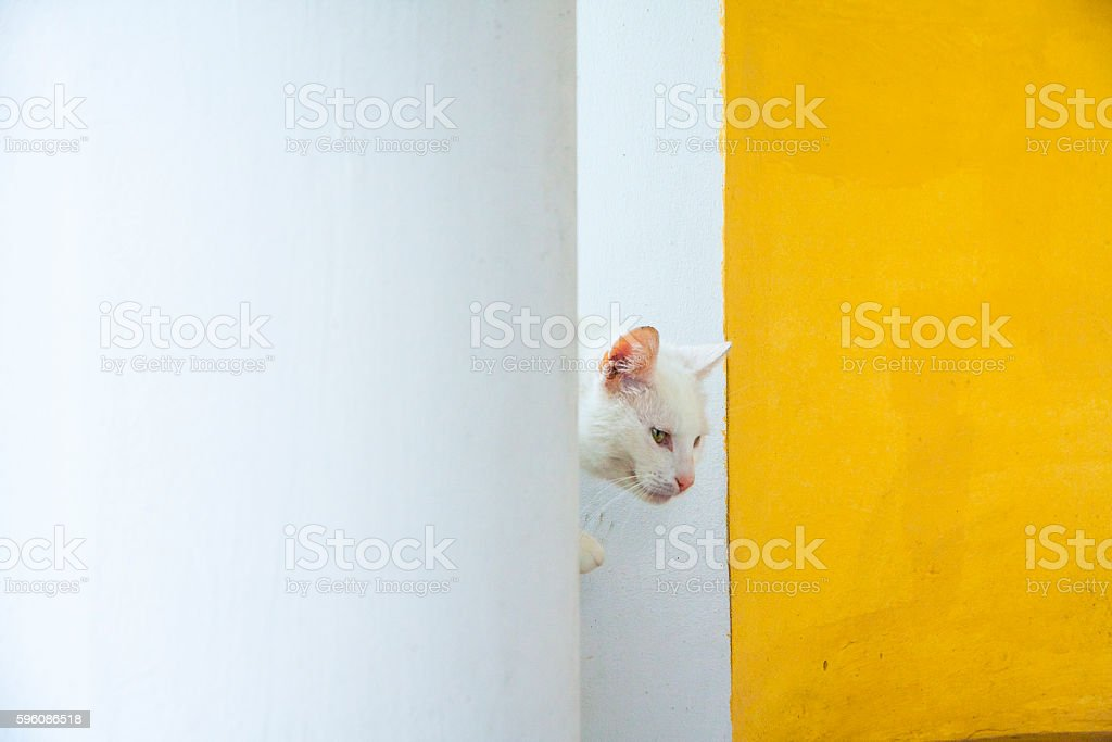 Peeping Cat royalty-free stock photo