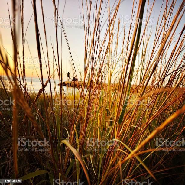 Photo of Peering Through the Sea Grass
