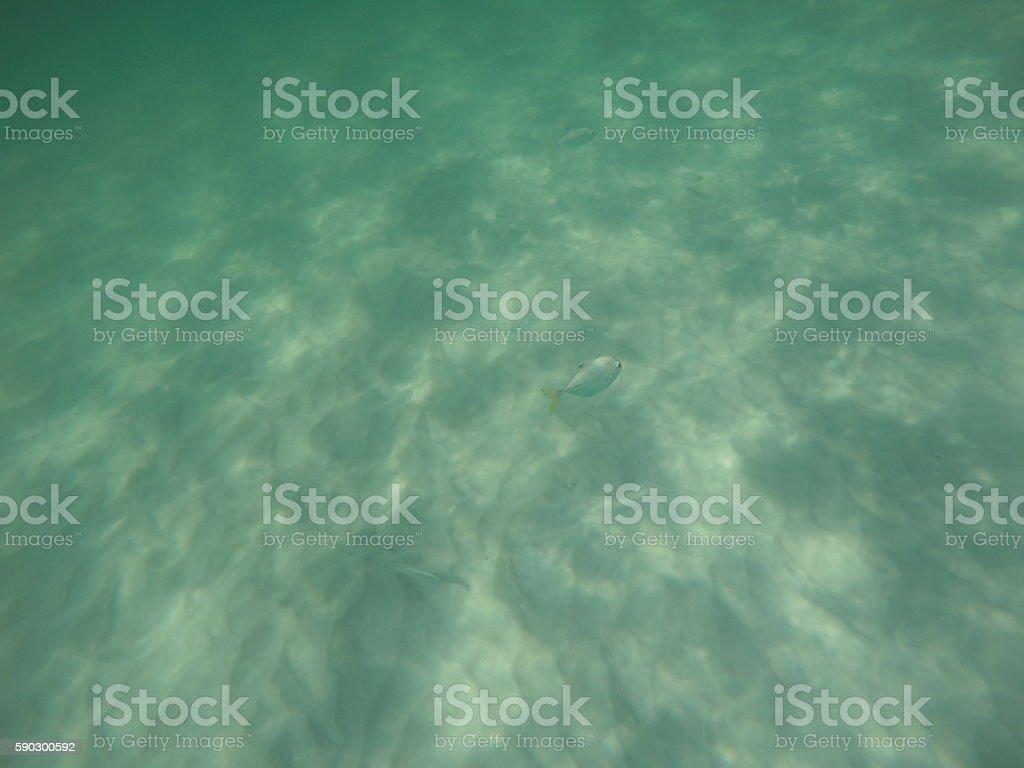 Peixes no fundo do mar royaltyfri bildbanksbilder
