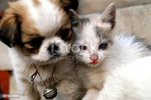 Pekingese with her cubs also adopts a cat.
