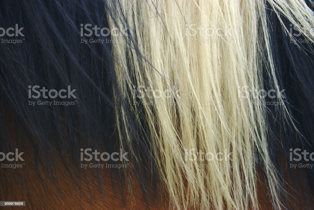 pelage et crinière de cheval stock photo