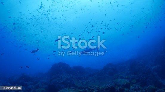 Darwin Island, Galapagos Islands, Ecuador - May 9, 2018 : Underwater sea life at Galapagos (2018_0428_0520-05-09_090833)