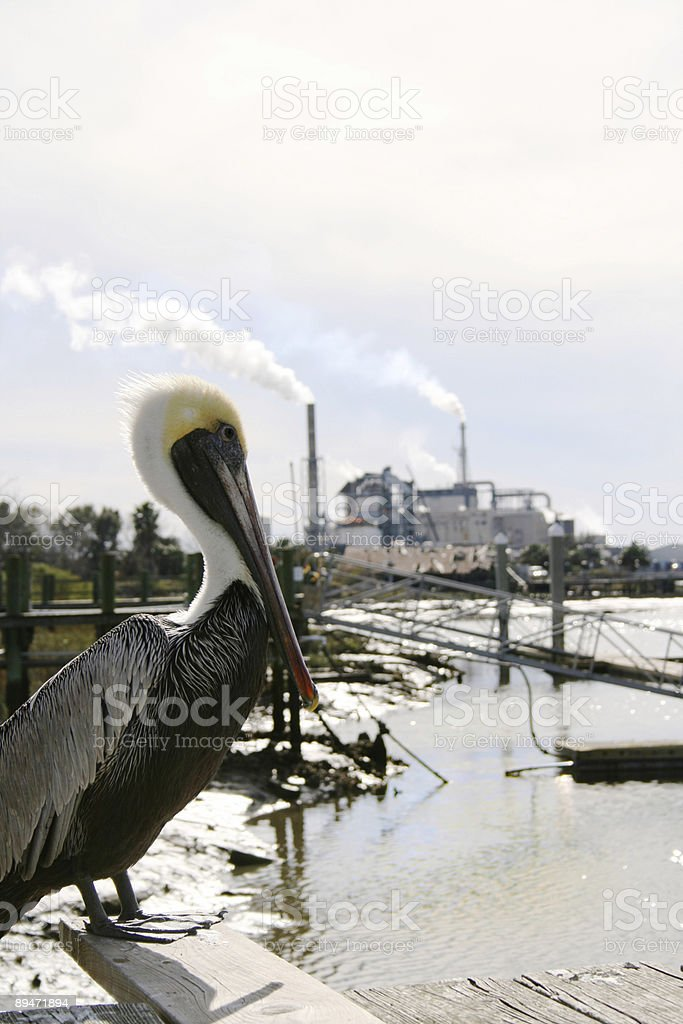 Pelican and Factory royalty-free stock photo