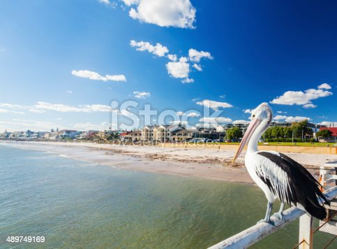 Pelican at a jetty in a beachside suburb in Adelaide, South Australia
