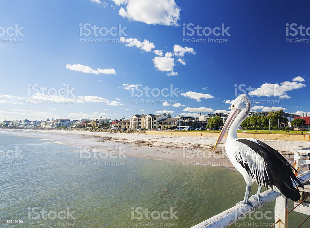 Pelican at a jetty in a beachside suburb in Adelaide stock photo