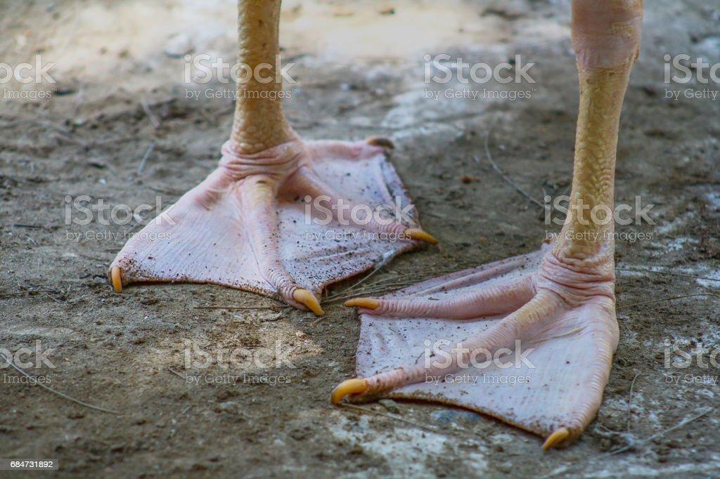 Pelican feet stock photo