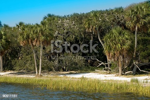 Pelicans in their rookery at Seahorse Key Lighthouse, Lower Suwannee National Wildlife Refuge, Florida.