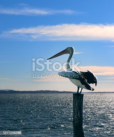 A pelican sitting on a pole with its wings spread catching the wind.