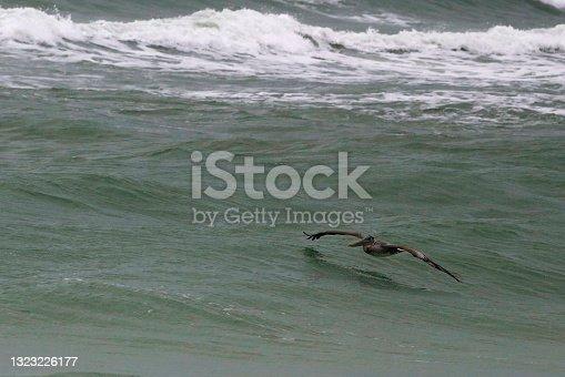istock Pelican Skims the Longboat Key Surf 1323226177