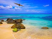 Pelican water bird flying over Beach, Montego Bay - Jamaica, Caribbean sea